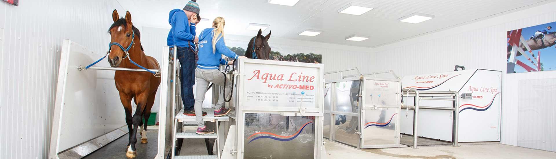 Prestige Equestrian Centre 7